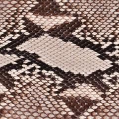 Python Skins