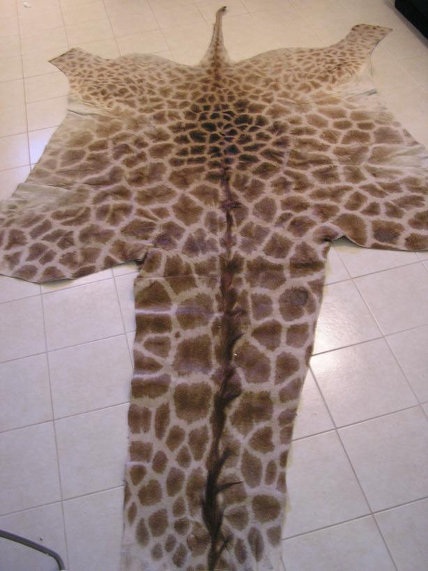 Giraffe Skin Rug Rugs Ideas